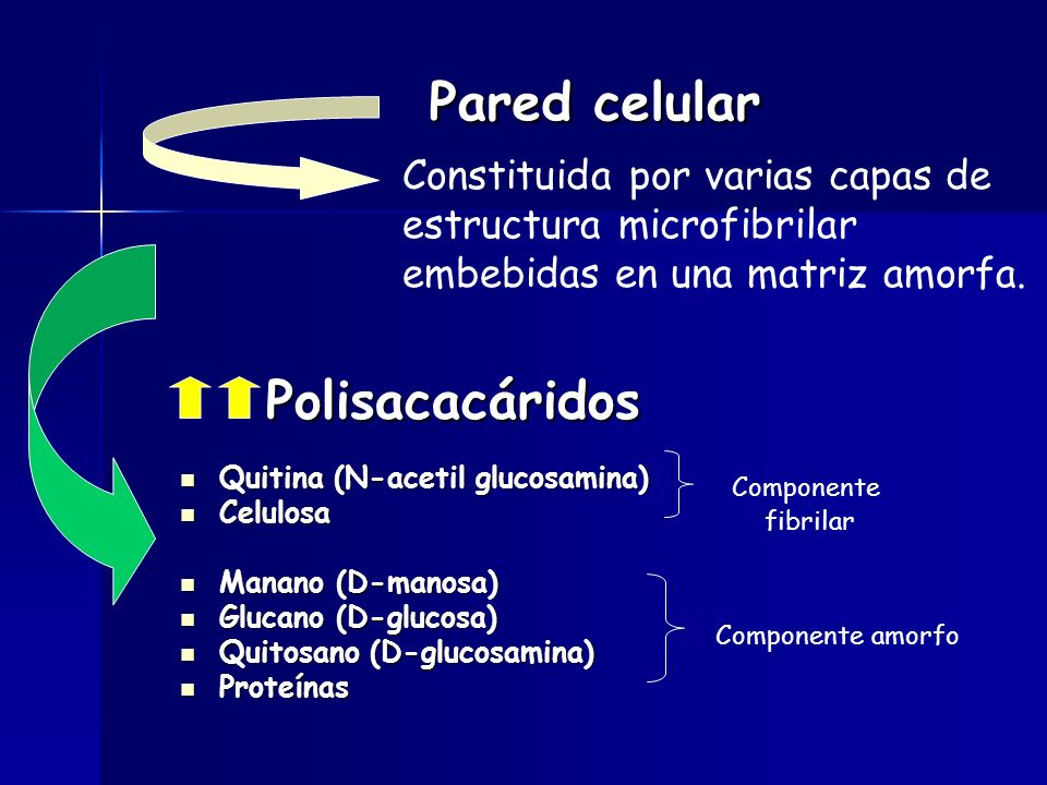 Pared celular Polisacacáridos