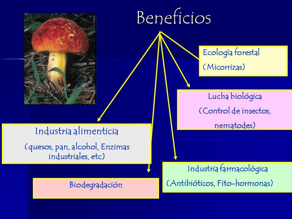 Beneficios Industria alimenticia Ecología forestal (Micorrizas)