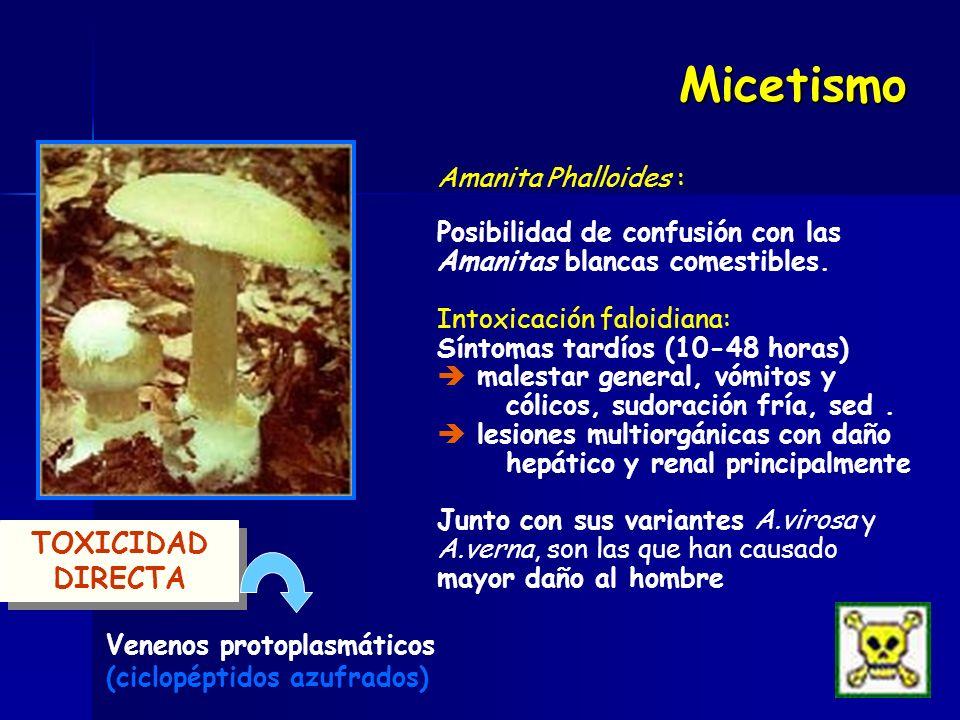 Micetismo TOXICIDAD DIRECTA Amanita Phalloides :