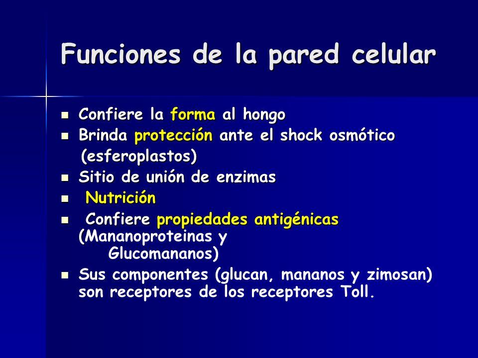 Funciones de la pared celular