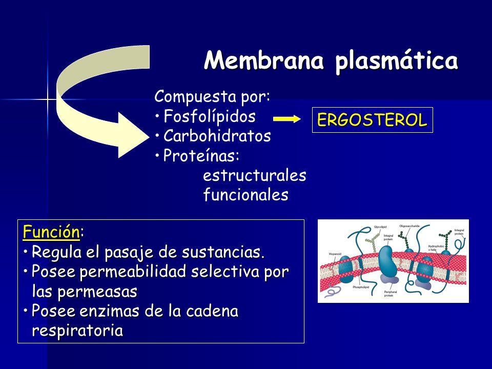 Membrana plasmática Compuesta por: Fosfolípidos Carbohidratos