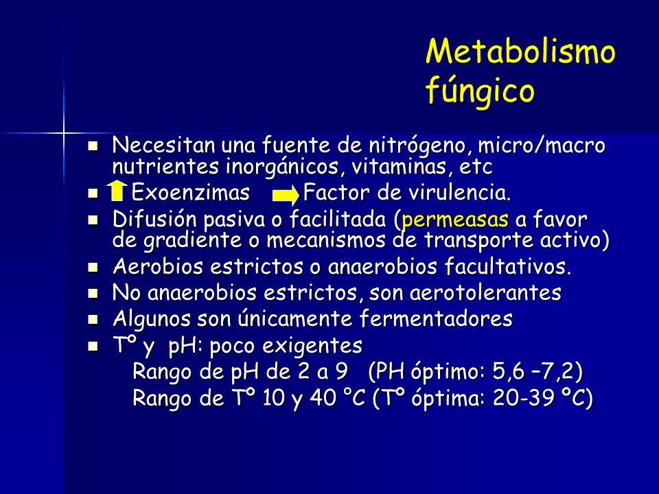 Metabolismo fúngico Necesitan una fuente de nitrógeno, micro/macro nutrientes inorgánicos, vitaminas, etc.