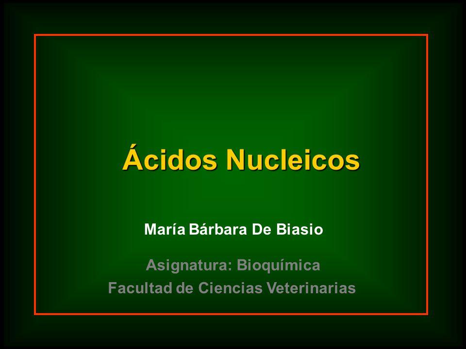 Ácidos Nucleicos María Bárbara De Biasio Asignatura: Bioquímica