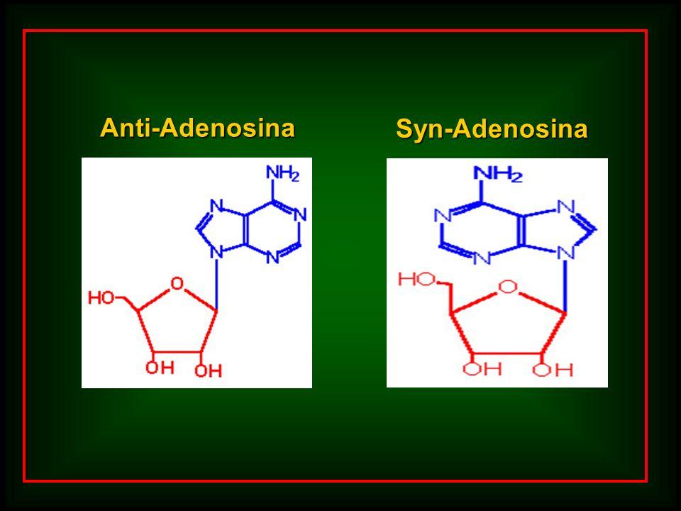 Anti-Adenosina Syn-Adenosina