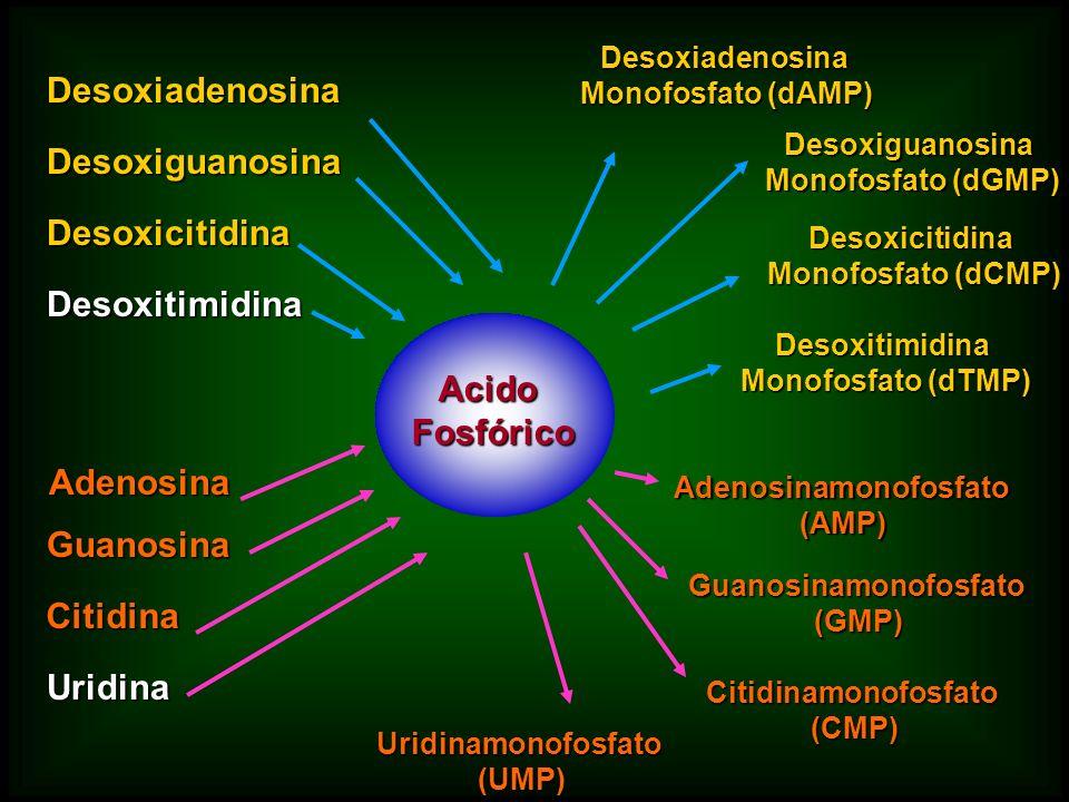 Adenosinamonofosfato Guanosinamonofosfato