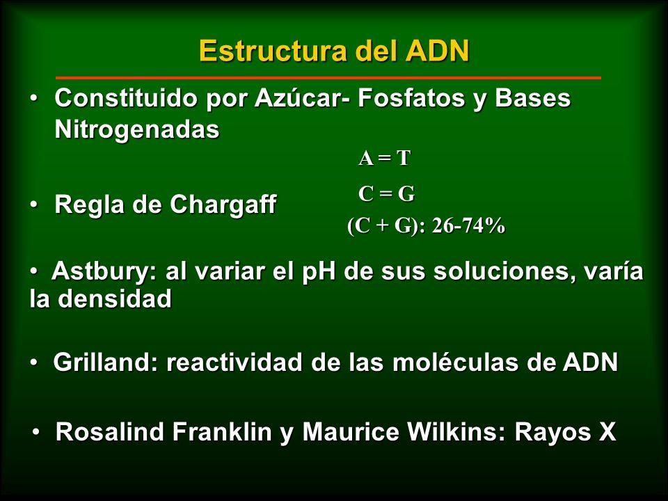 Estructura del ADNConstituido por Azúcar- Fosfatos y Bases Nitrogenadas. Regla de Chargaff. A = T. C = G.