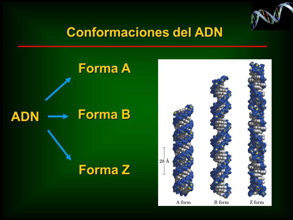 Conformaciones del ADN