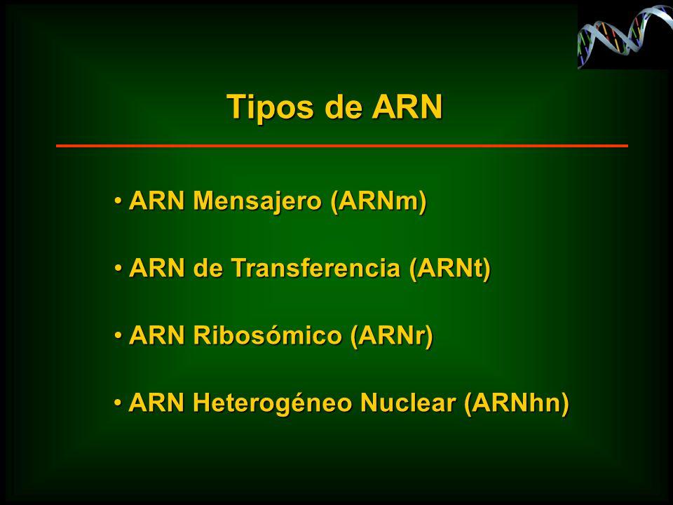 Tipos de ARN ARN Mensajero (ARNm) ARN de Transferencia (ARNt)