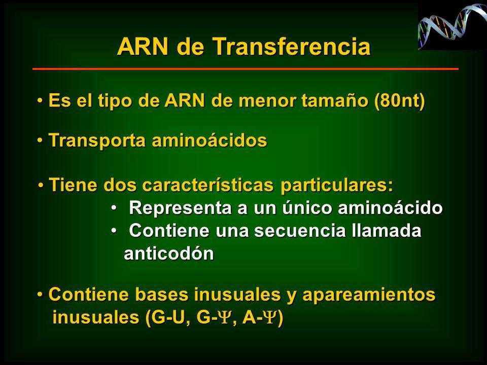 ARN de Transferencia Es el tipo de ARN de menor tamaño (80nt)