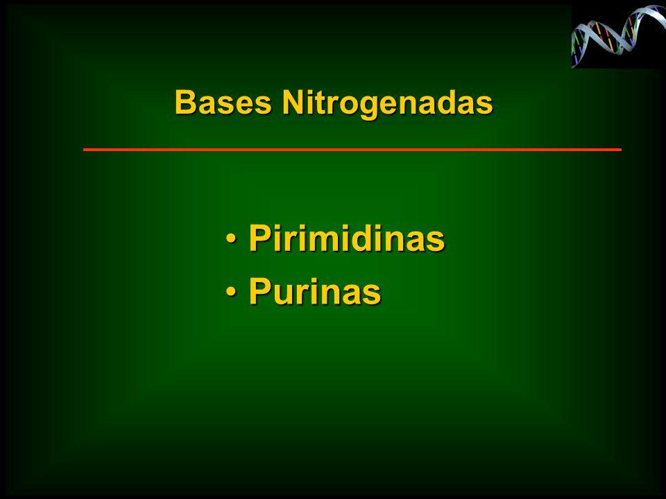 Bases Nitrogenadas Pirimidinas Purinas