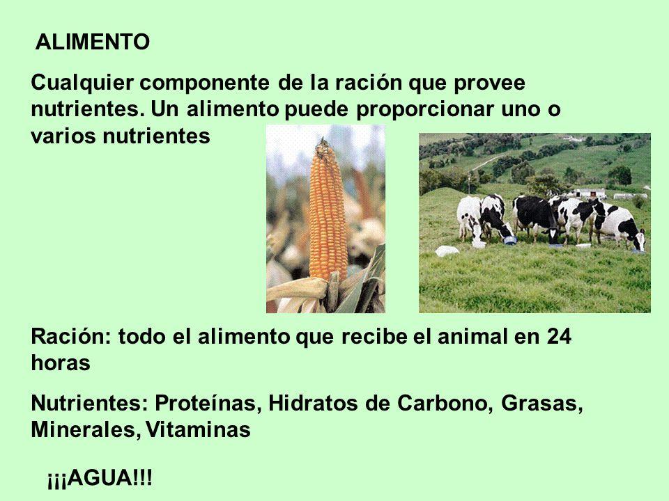 Ración: todo el alimento que recibe el animal en 24 horas