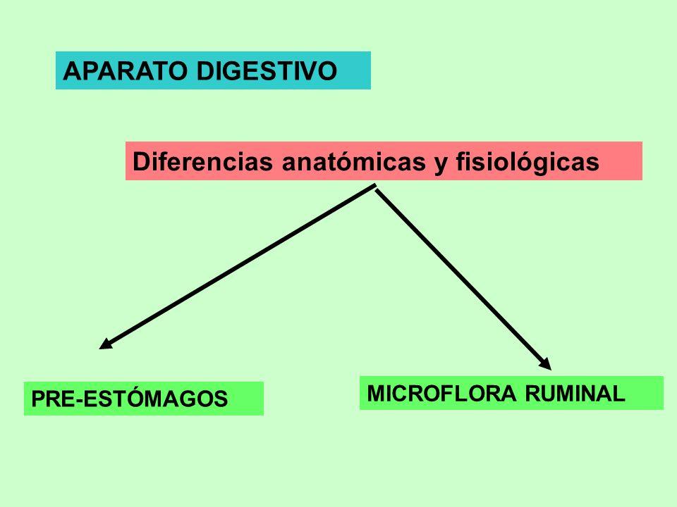 Diferencias anatómicas y fisiológicas