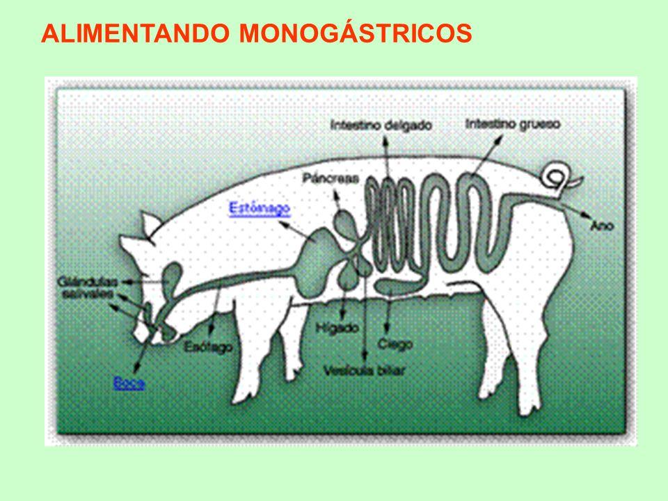 ALIMENTANDO MONOGÁSTRICOS