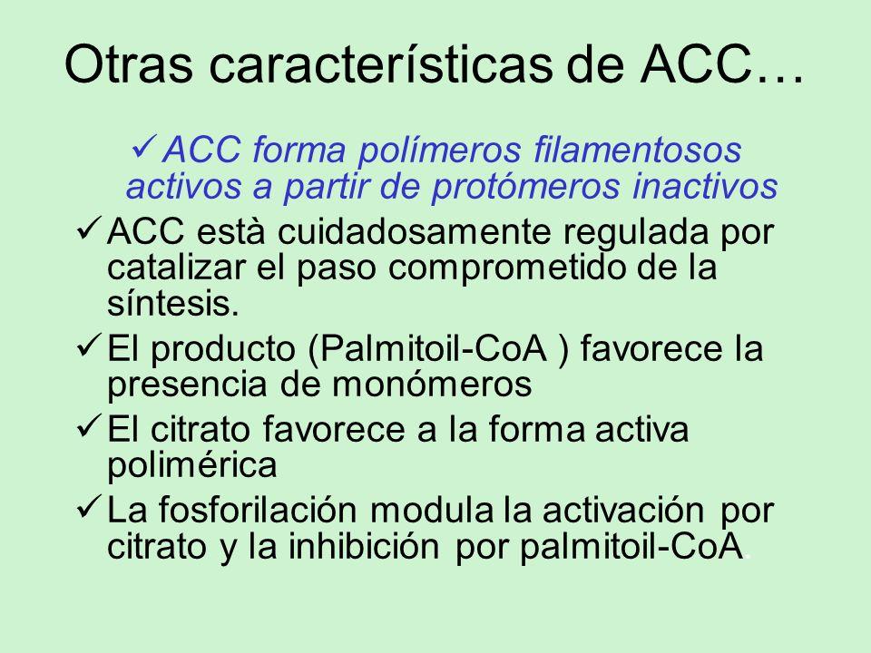 Otras características de ACC…