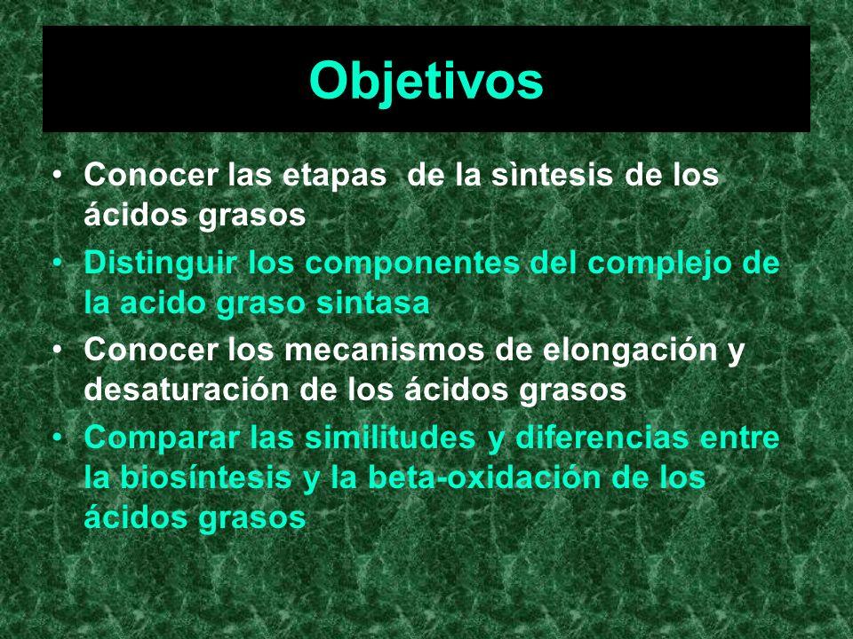 Objetivos Conocer las etapas de la sìntesis de los ácidos grasos
