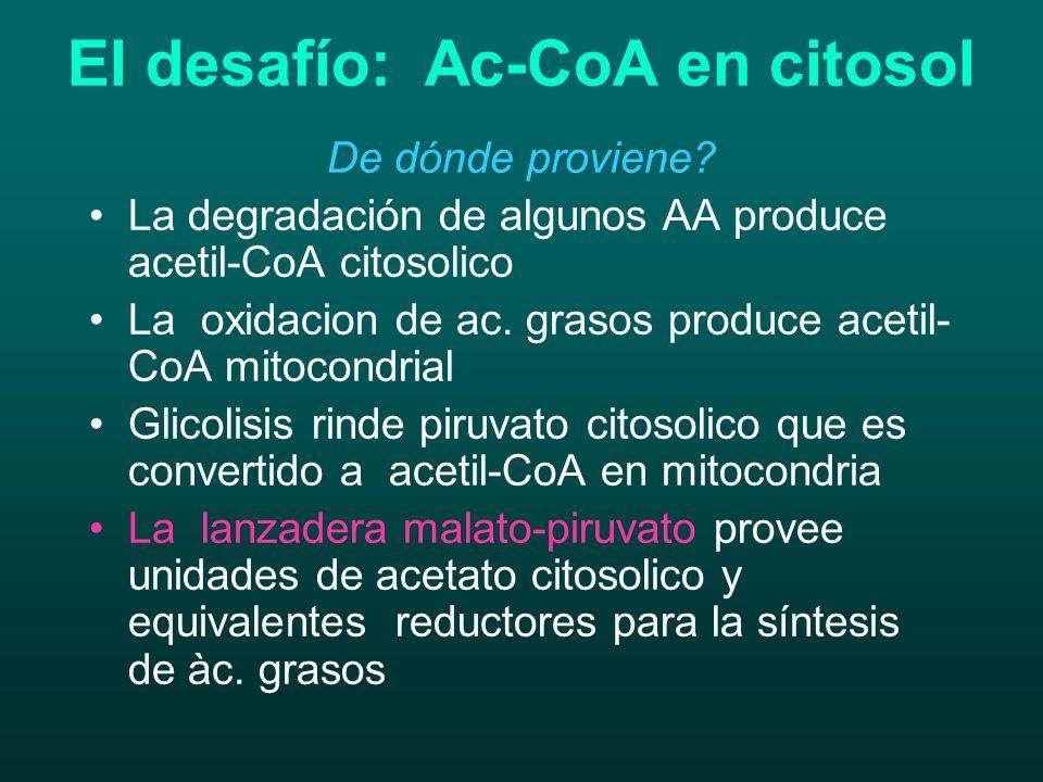 El desafío: Ac-CoA en citosol