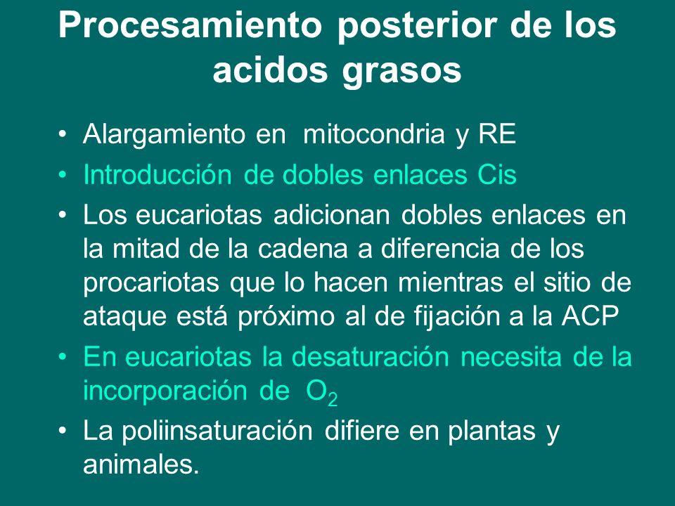 Procesamiento posterior de los acidos grasos