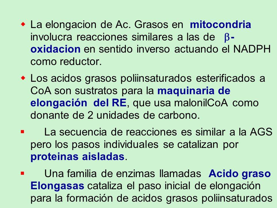 La elongacion de Ac. Grasos en mitocondria involucra reacciones similares a las de b-oxidacion en sentido inverso actuando el NADPH como reductor.