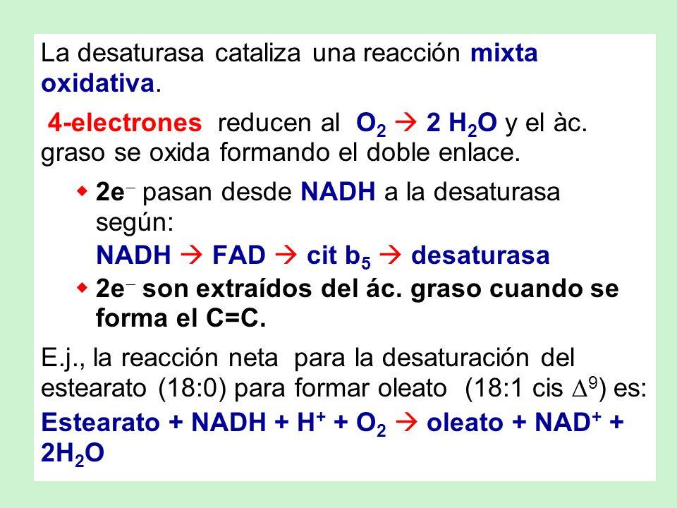 La desaturasa cataliza una reacción mixta oxidativa.