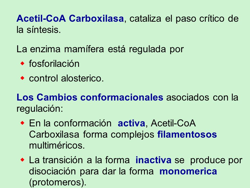 Acetil-CoA Carboxilasa, cataliza el paso crítico de la síntesis.