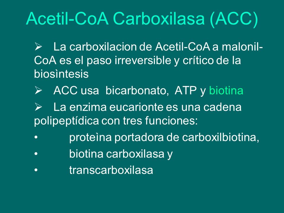 Acetil-CoA Carboxilasa (ACC)