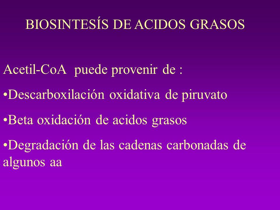 BIOSINTESÍS DE ACIDOS GRASOS