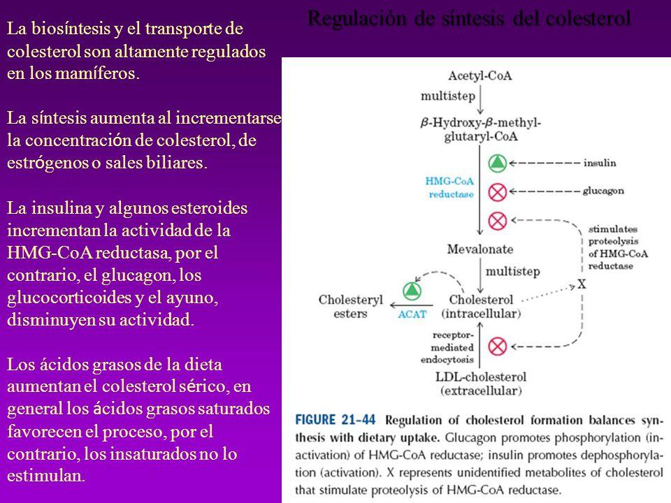 Regulación de síntesis del colesterol