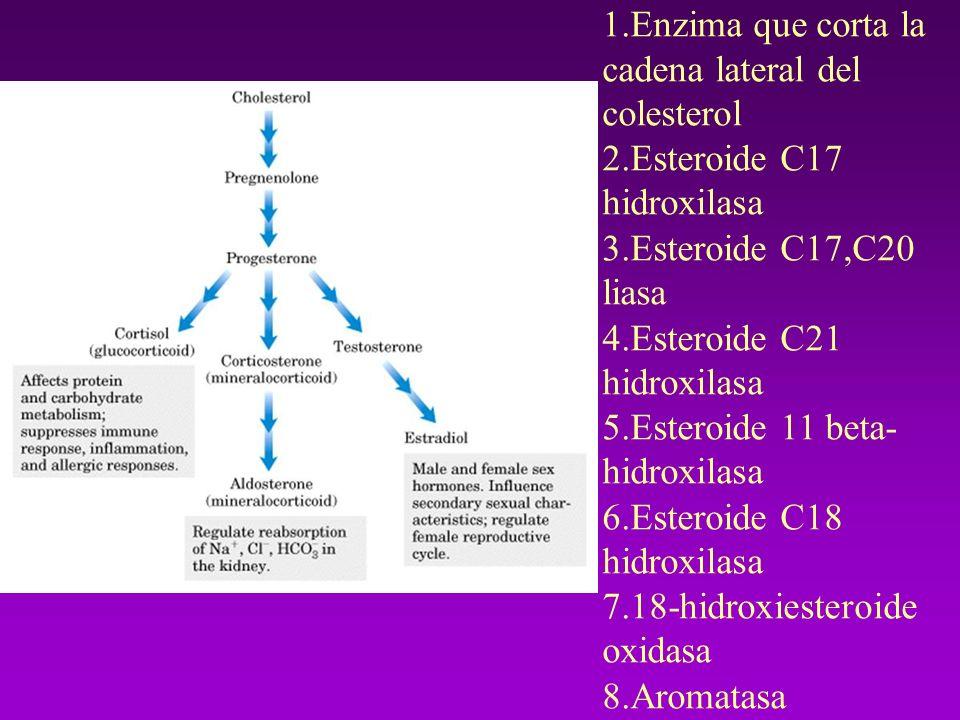 En la biosíntesis de los esteroides hay siete pasos y ocho enzimas que se listan a continuación: