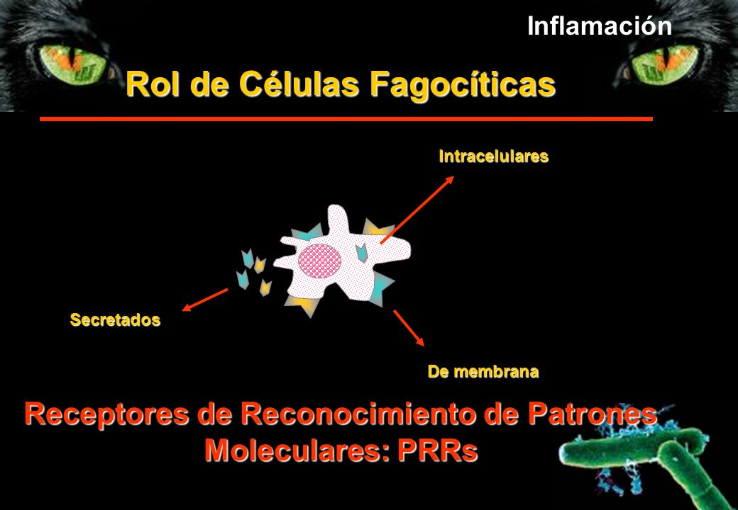 Rol de Células Fagocíticas Receptores de Reconocimiento de Patrones