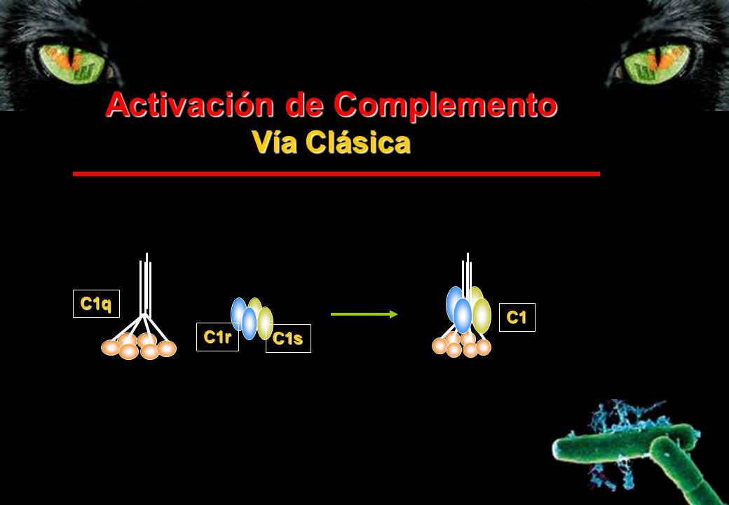 Activación de Complemento Vía Clásica