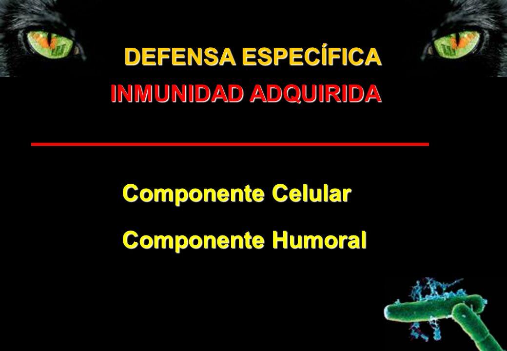 DEFENSA ESPECÍFICA INMUNIDAD ADQUIRIDA Componente Celular Componente Humoral
