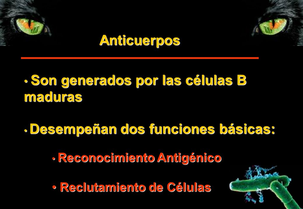 Anticuerpos maduras Reclutamiento de Células