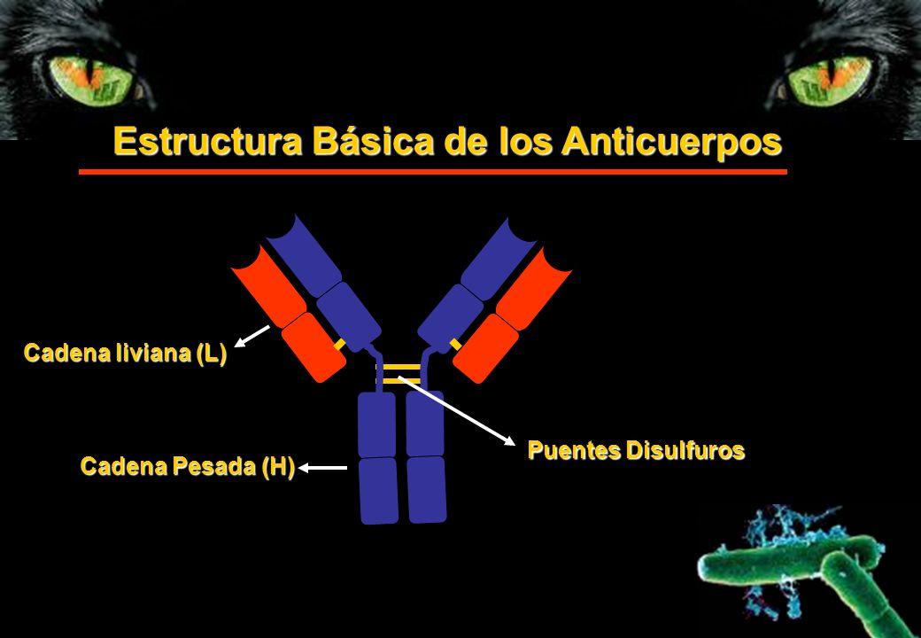 Estructura Básica de los Anticuerpos