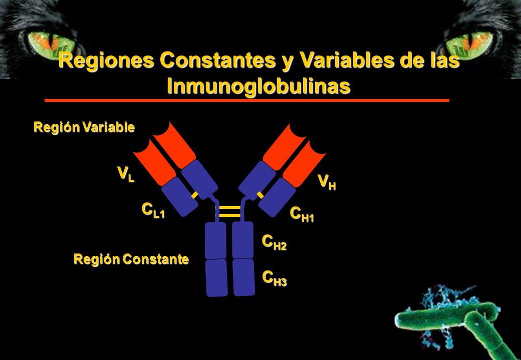 Regiones Constantes y Variables de las Inmunoglobulinas