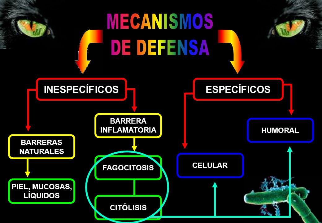 MECANISMOS DE DEFENSA INESPECÍFICOS ESPECÍFICOS BARRERA INFLAMATORIA