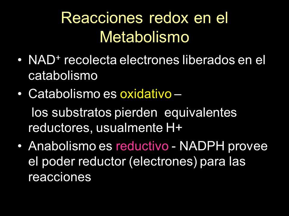 Reacciones redox en el Metabolismo