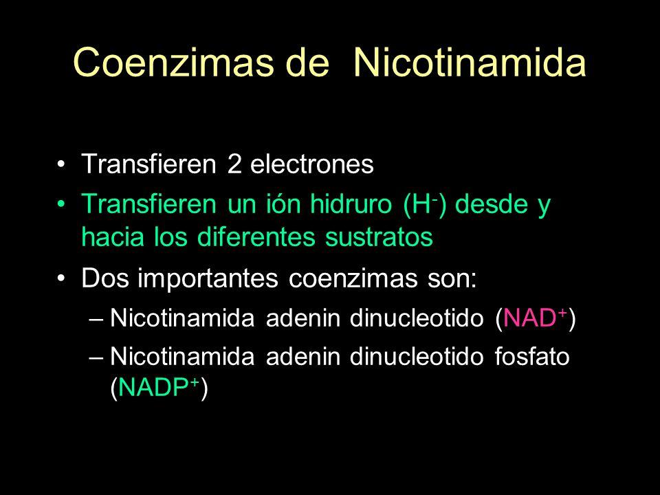 Coenzimas de Nicotinamida