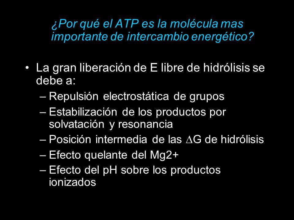 Phosphoric Acid Anhydrides
