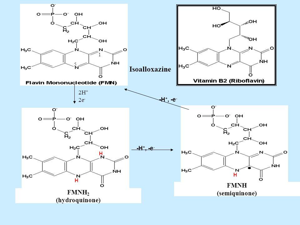 Isoalloxazine FMNH (semiquinone) FMNH2 (hydroquinone) 2H+ 2e- -H+, -e-