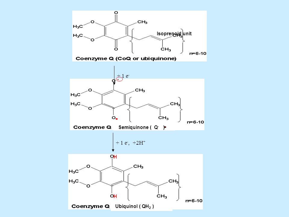 + 1 e- - + 1 e-, +2H+ Isoprenoid unit Semiquinone ( Q- ) H
