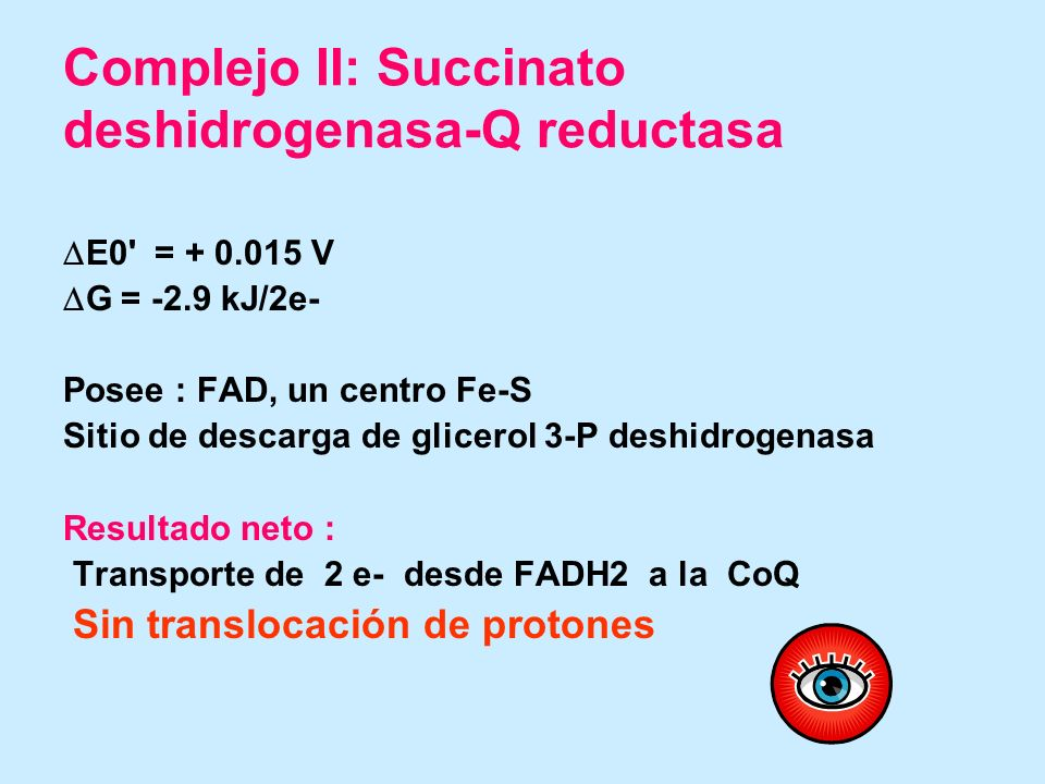 Complejo II: Succinato deshidrogenasa-Q reductasa