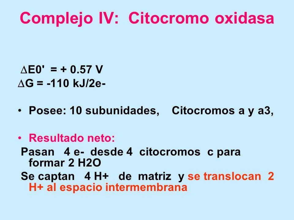 Complejo IV: Citocromo oxidasa