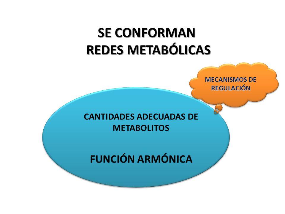 MECANISMOS DE REGULACIÓN CANTIDADES ADECUADAS DE METABOLITOS