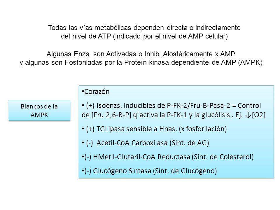 Algunas Enzs. son Activadas o Inhib. Alostéricamente x AMP