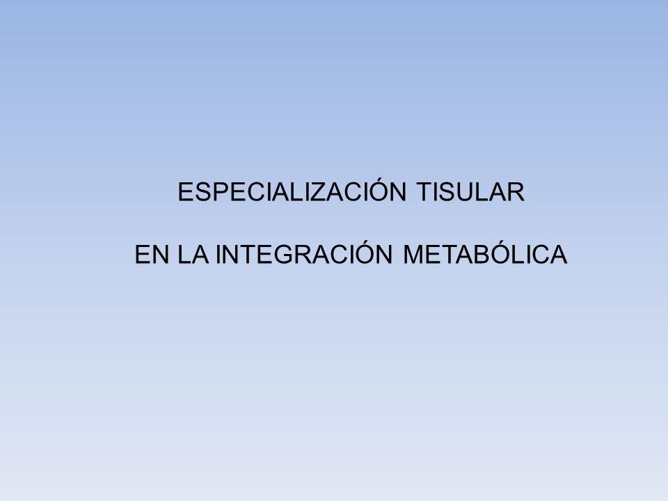 ESPECIALIZACIÓN TISULAR EN LA INTEGRACIÓN METABÓLICA