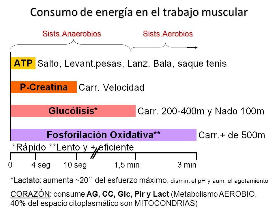 Consumo de energía en el trabajo muscular