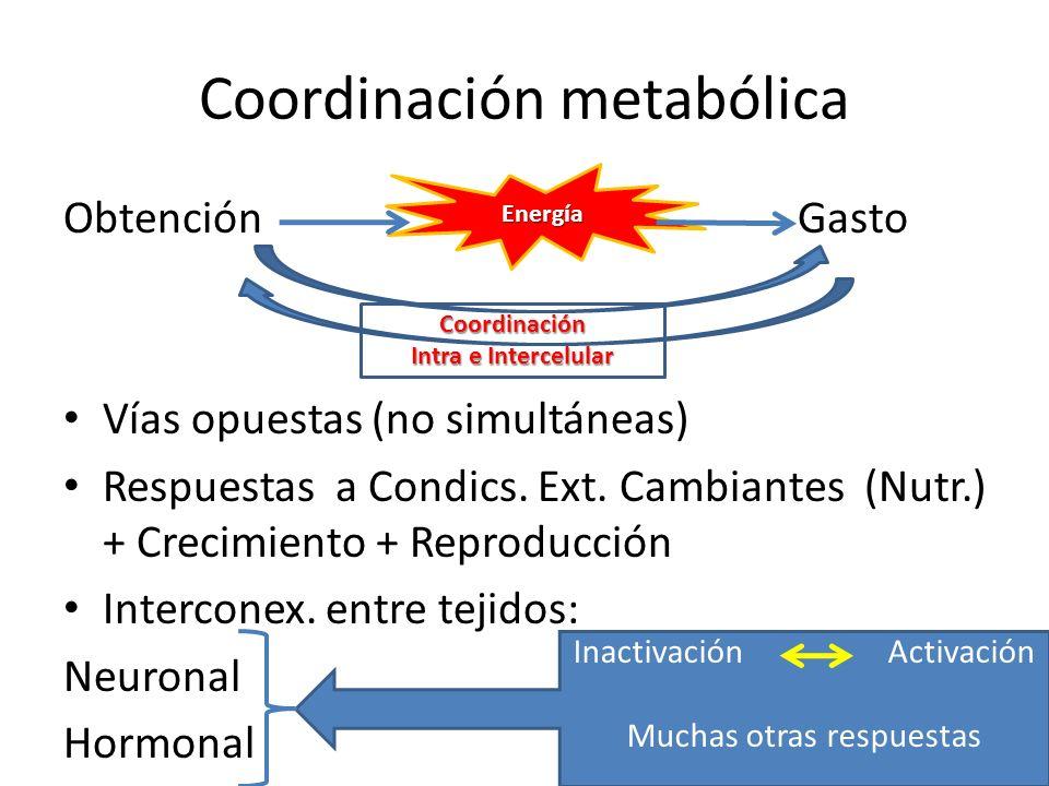 Coordinación metabólica