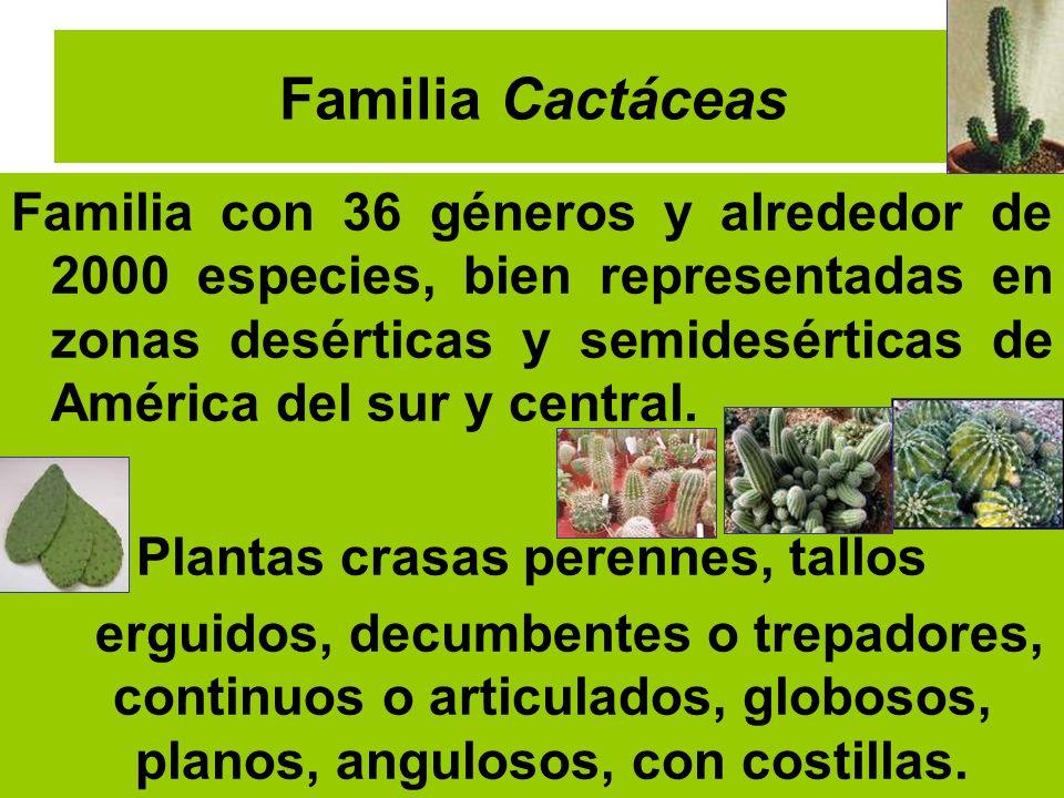 Plantas crasas perennes, tallos
