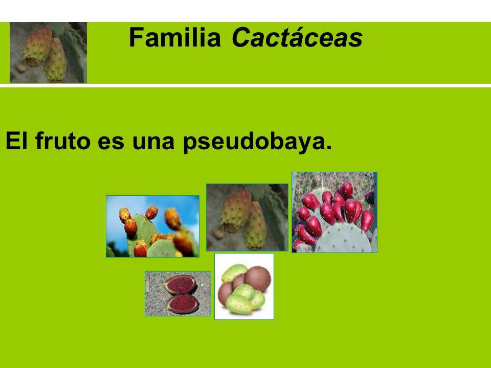 Familia Cactáceas El fruto es una pseudobaya.