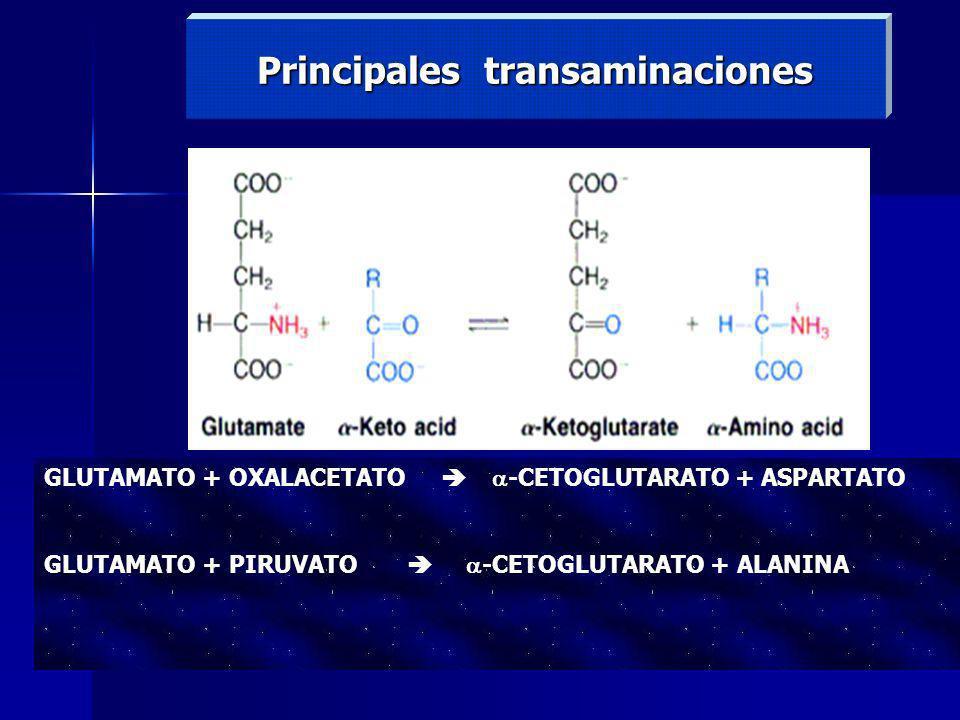 Principales transaminaciones